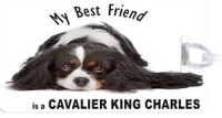 UKBK-My-Best-Friend-is-BlkWht-Cavalier-King